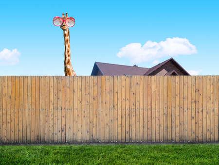 neighbor: curious neighbor