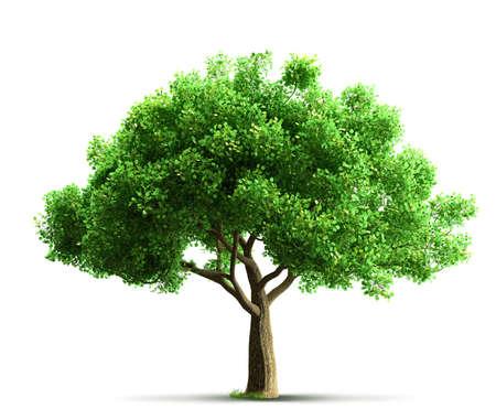 나무 고립
