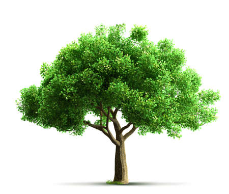 tree: tree isolated