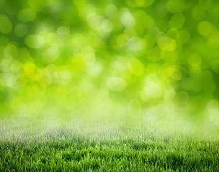 tráva pozadí