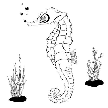 sea horse: Sea Horse color book