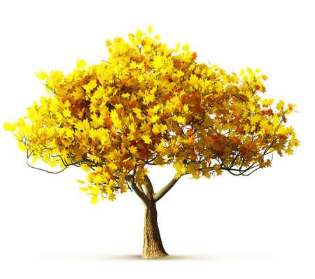 feuille arbre: érable d'automne isolé