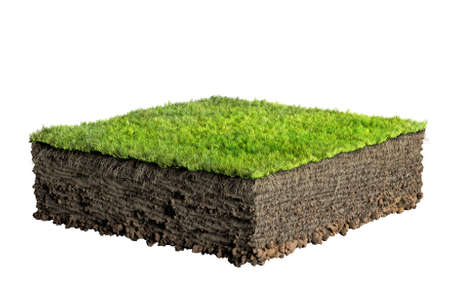 grass illustration: grass and soil profile Stock Photo