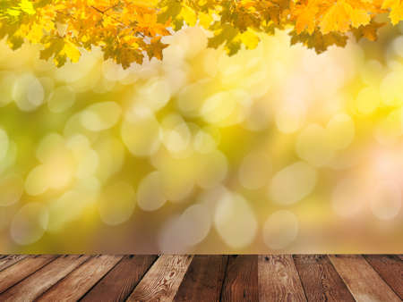 fall leaves: autumn background Stock Photo
