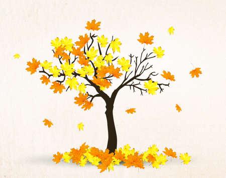 maple tree: autumn maple tree
