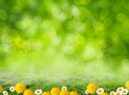flowers field: grass background
