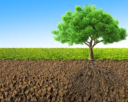 grass illustration: tree with roots 3D rendering Stock Photo