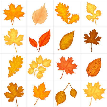 fall of the leaves: autumn leaves