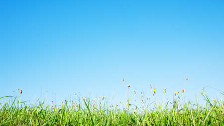 in profile: grass profile