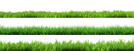 gras geïsoleerd