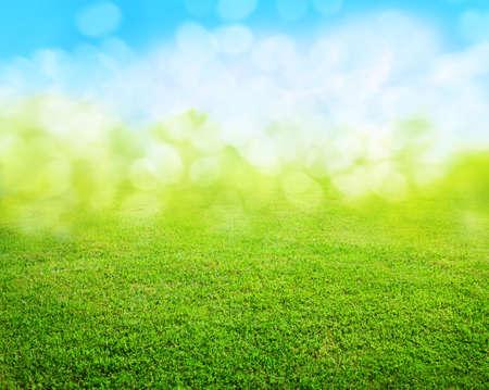la hierba de fondo  Foto de archivo