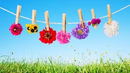 summer flowers background Foto de archivo