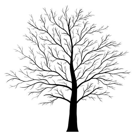 tree branch: tree isolated