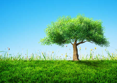 tree grass: tree with grass Stock Photo