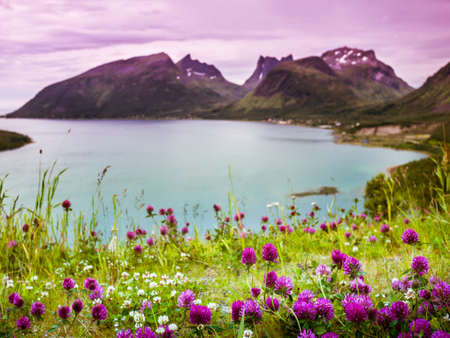 ocean plants: Norway nature Stock Photo