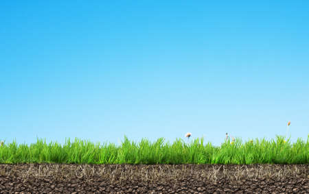 fields  grass: grass with roots and soil Stock Photo