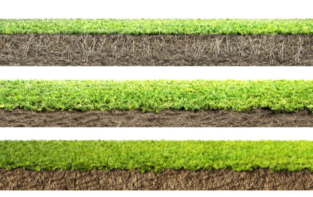 soil: grass with roots and soil Stock Photo