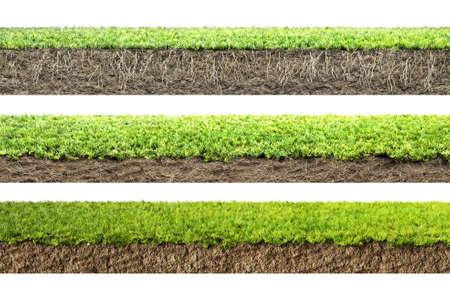 herbe avec racines et le sol