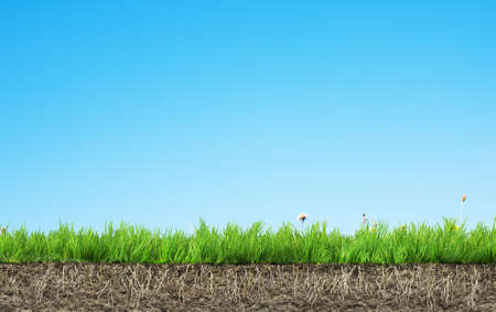 grass roots: grass with roots and soil Stock Photo