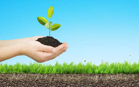 soil: child hands with tree Stock Photo