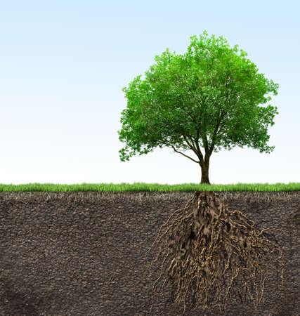 boom: boom met wortels