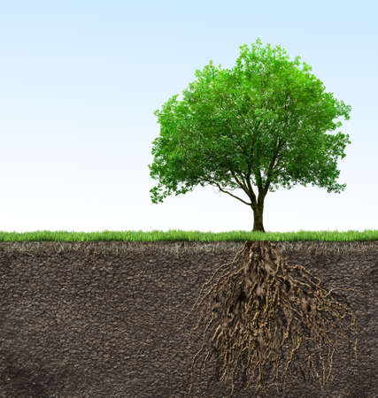 planta con raiz: árbol con raíces Foto de archivo