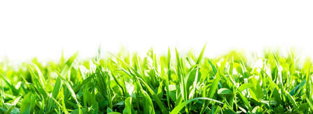 seedling: green grass background