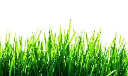 分離された緑の草