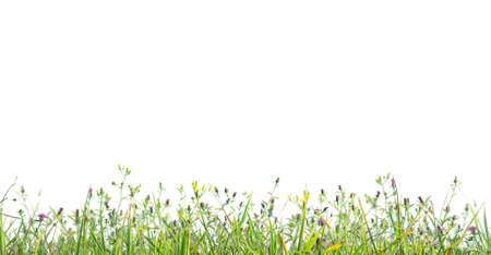 in profile: grass profile isolated