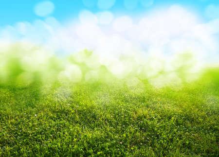 garden lawn: grass background