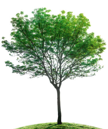 foliage  natural: tree isolated illustration Stock Photo