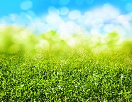 blurred: green grass blurred background