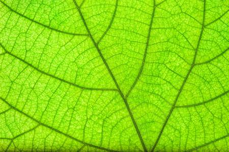 close up: green leaf close up
