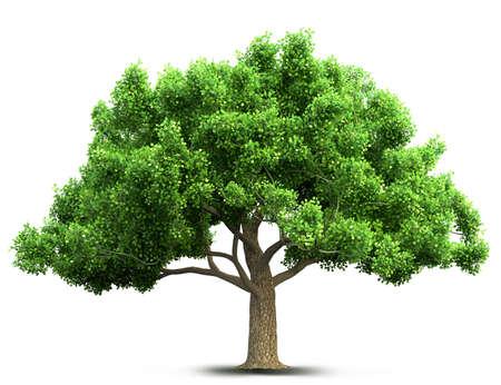 isolado no branco: árvore isolada Ilustração 3D Banco de Imagens
