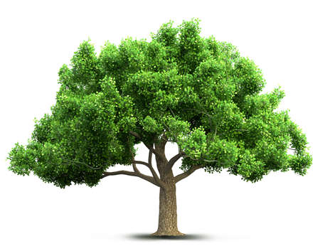 plants: tree isolated 3D illustration