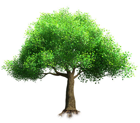 foliage  natural: tree isolated 3D illustration