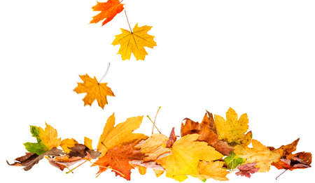 Herbstszenen isoliert Standard-Bild