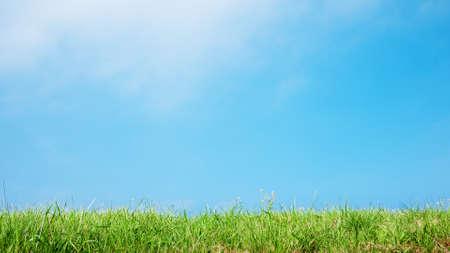 草の自然な背景