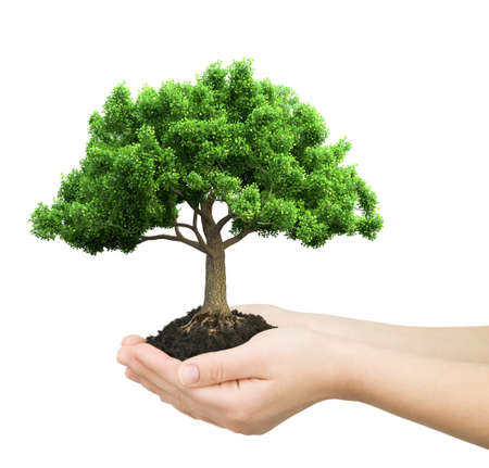 hands holding plant: hands holding green plant isolated 3D illustration  Stock Photo
