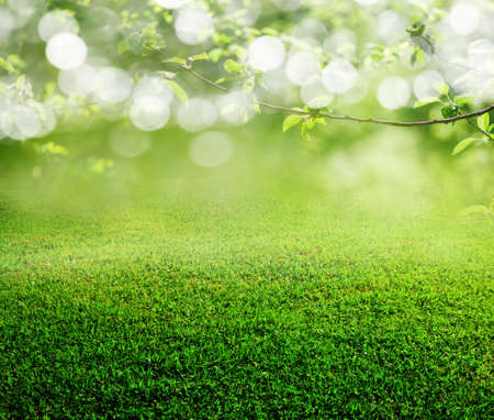 spring time: spring grass background