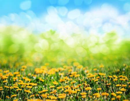 hierba de la primavera y de las flores Foto de archivo
