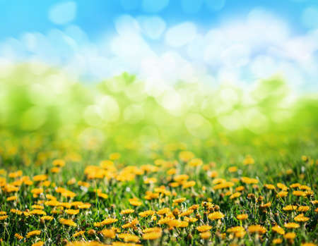 green backgrounds: spring grass and flowers background Stock Photo