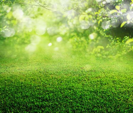 Lente gras achtergrond Stockfoto