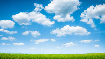 青い空と夏の緑のフィールド風景