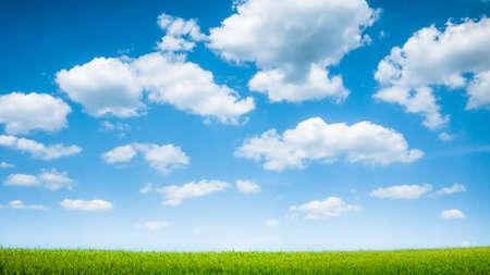 Blauwe hemel en zomer groen veld landschap Stockfoto