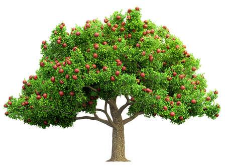 red apple tree isolated 3D illustration Archivio Fotografico