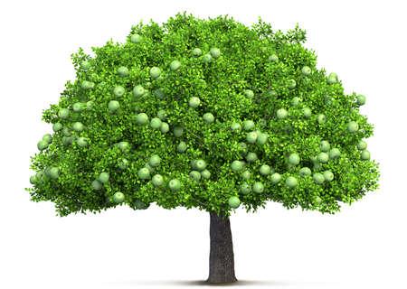 apple tree isolated 3D illustration