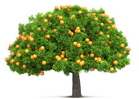 oranje boom geïsoleerde 3D illustratie