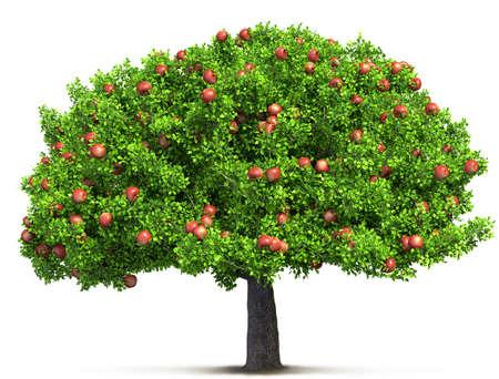 red apple tree isolated 3D illustration Фото со стока