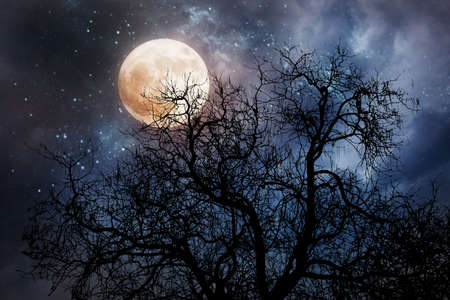 Halloween background with moon and dead tree Imagens